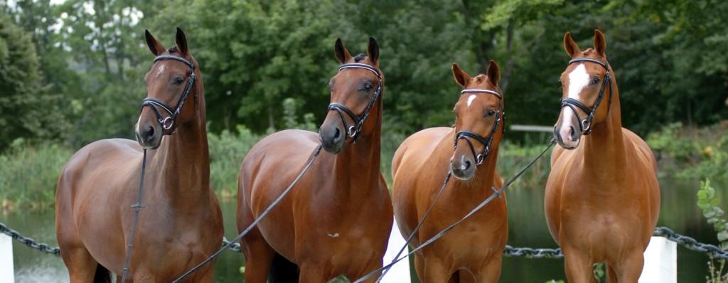 Bollerup häst avel